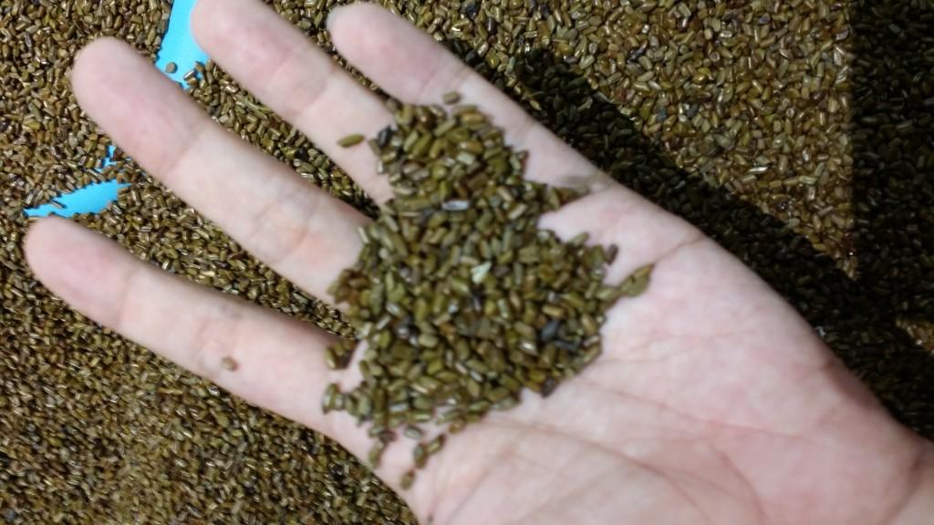 The Cassia Seeds